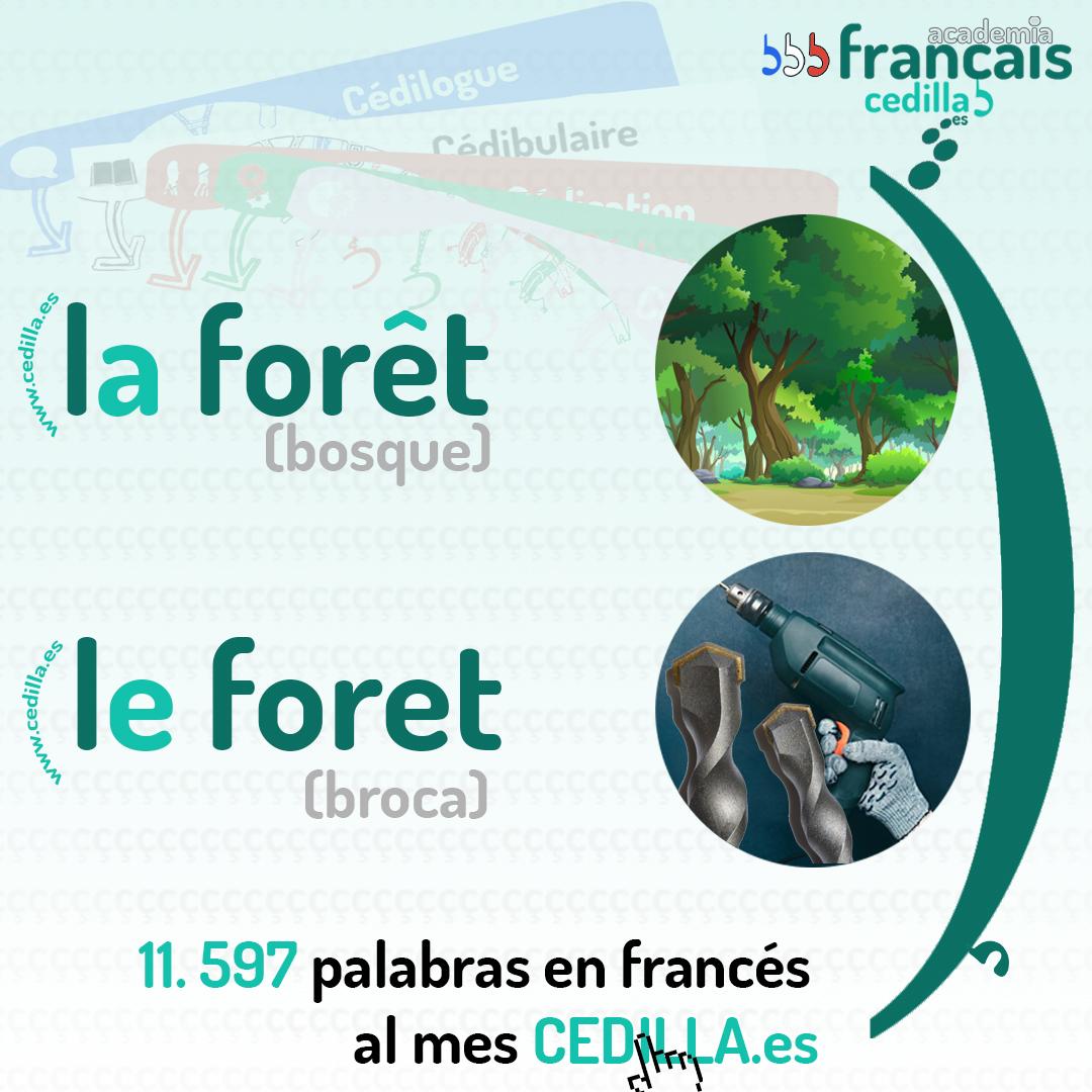 articulo-masculino-femenino-frances-bosque-broca-cedilla-academia